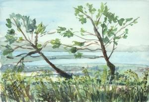 arbres torturés par le sel et la mer, Tombolo de Giens, Hyères