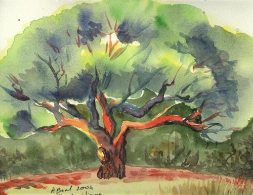 Le pin maritime, Villa Aurélienne, Fréjus, aquarelle, Tous droits réservés