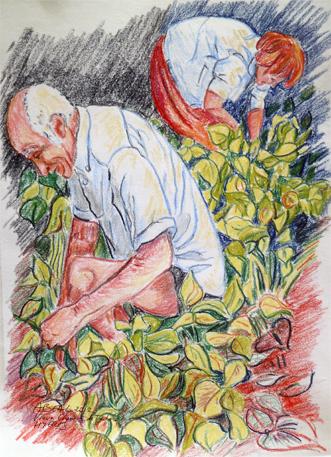 La cueillette des haricots, Hyères, crayons pastels, Arlette Béal, tous droits réservés