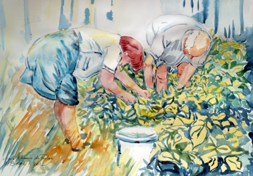 La cueillette des haricots, serres à Hyères, aquarelle, Arlette Béal, tous droits réservés