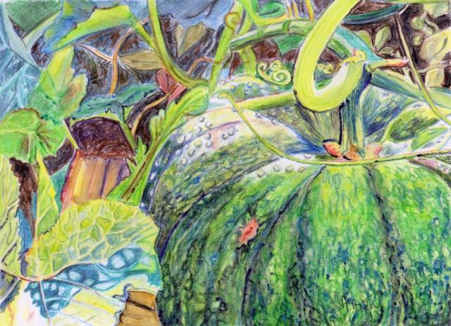 Le jardin de Victor, courge verte. aquarelle et crayons. A4 papier d'Arches. Tous droits réservés.